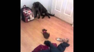 My pups!!!! Thumbnail