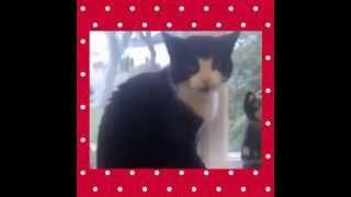 Кошки, которые говорят - Hello