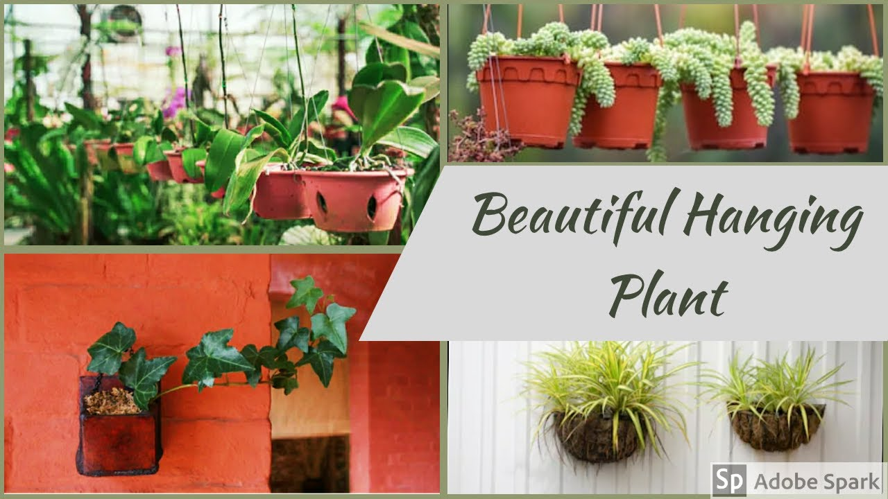 Beautiful Hanging Plant Ideas//flowering hanging plants for home decoration