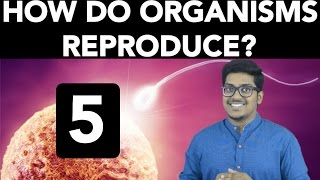 Biology: How do Organisms Reproduce? (Part 5) thumbnail