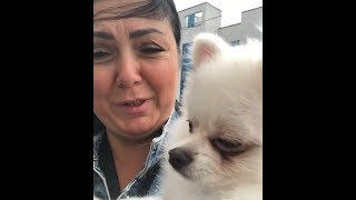 Мама Майи Донцовой не справляется с ее собакой Персиком ))