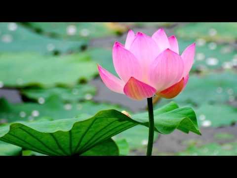 Buddhist Chant - Praise of the Lotus Pond (HD)
