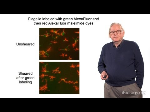 Howard Berg (Harvard) Part 2: Marvels of Bacterial Behavior - Molecular Machinery