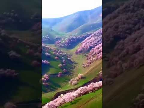 Beauty Of Nature | Beautiful Voice | Holy Quran |