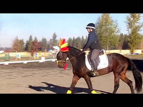 Spokane Sport Horse Fall Event  Dragon Lilly's first event with me