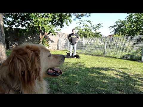 Falle Narzissmus - Wer wird Opfer? Was kann man tun? von YouTube · Dauer:  10 Minuten 34 Sekunden