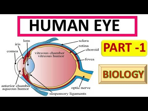 Human Eye Structure and working (SSC , UPSC , State PSC exams )