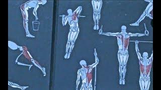 Уроки скульптуры и рисунка: этюд фигуры человека, часть 6