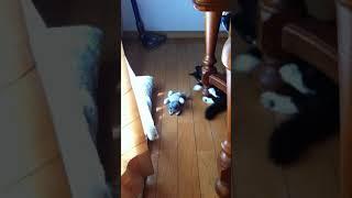 キックとパンチが止まらない子ネコ thumbnail