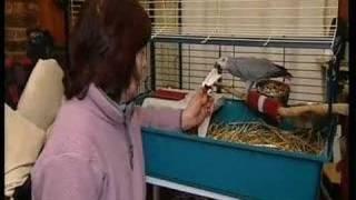 How to mend a parrots broken leg