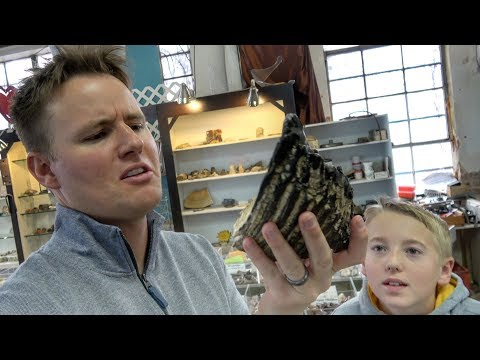 What's inside a MAMMOTH TOOTH?