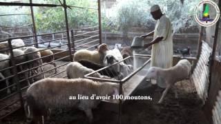 [Portrait]- L'éleveur de moutons