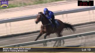 Lot 19 - 2YOs in Training Breezeup Thumbnail