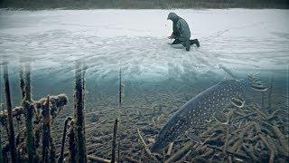 ОСТАВИЛ ЖЕРЛИЦЫ В КАМЫШЕ И ТУТ НАЧАЛОСЬ Рыбалка на щуку 2020