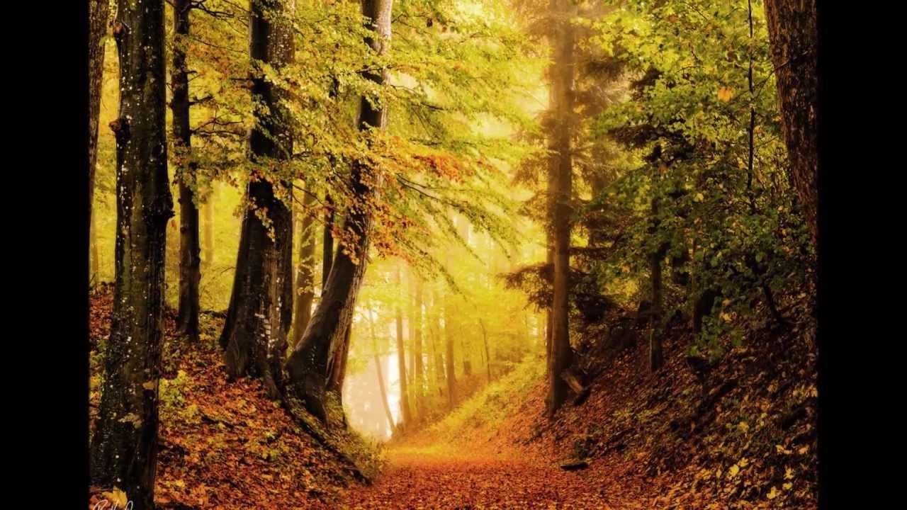 Fogyni ősszel Egyszerű őszi diéta 3 napos mintaétrenddel   paneer.hu