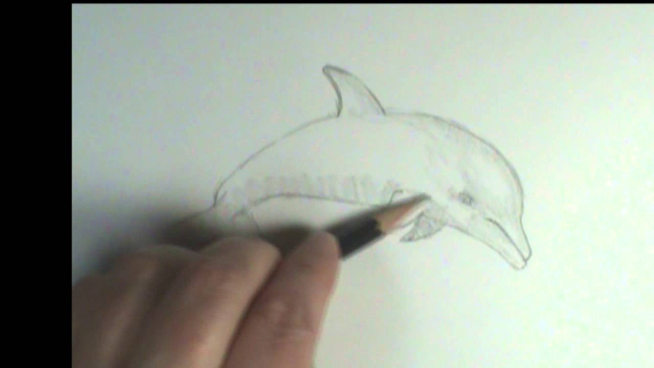 How to draw a Dolphin - YouTube