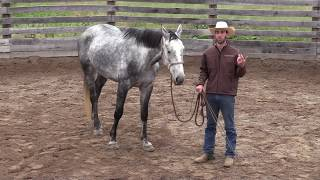 Teaching Your Horse to Work at Liberty Series | Developing Draw & the Stop Cue