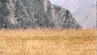 Мимино - Trailer