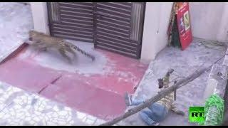 شاهد: فهد يهاجم حشدا من الناس في الهند