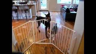 Joie My Dobie  Opens Gate