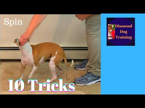 Trick Dog Novice Checklist/ Have Fun Teaching Your Dog Tricks And Get Novice Trick Title