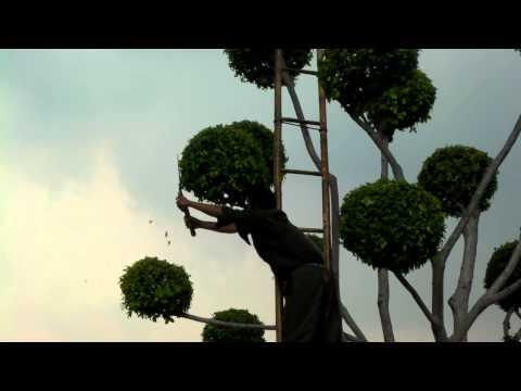 King Rama V - Palace - Bangkok Thailand - Tree Trimming - พระมหากษัตริย์