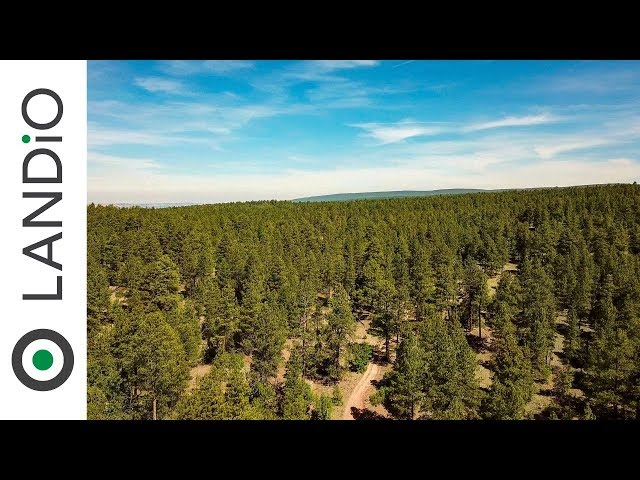 SOLD by LANDiO • Land in New Mexico •20 Acres with Access to National Forest