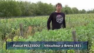 Vignes : des couverts végétaux pour des sols vivants