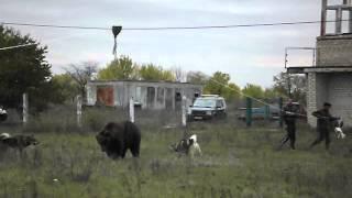 Авалян лайки Хант-Пуля(, 2012-10-31T18:04:06.000Z)