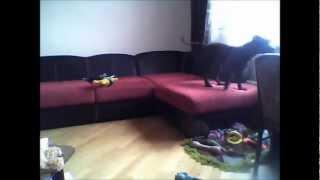 Что делает собака, пока нас нет дома(Запись с веб-камеры., 2013-03-20T19:39:13.000Z)