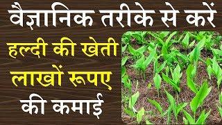 हल्दी की वैज्ञानिक खेती एक एकड़ जमीन से 8 महीने में करोडो कमाई | turmeric farming | haldi kheti