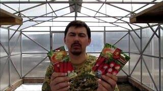 семена редиса для теплицы, учимся на ошибках