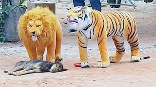 Troll Prank dog & fake Lion and Fake Tiger Prank To dog | Videos Troll 2021