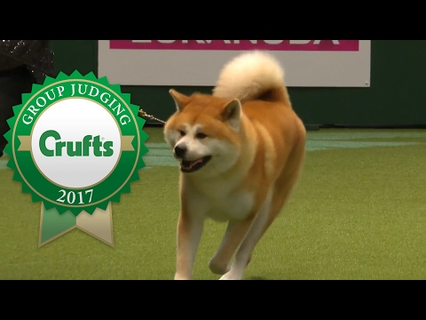 Utility Group Judging and Presentation | Crufts 2017
