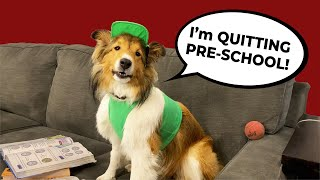 'I'm QUITTING PRESCHOOL!'  a Biscuit Talky Compilation on Cricket 'the sheltie' Chronicles