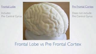 Frontal Lobe Anatomy