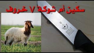 سكين أم شوكة الألمانية واختبار الخروف بدون ما تسن slaughtring a sheep with f.herder knife