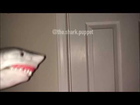 Shark Puppet Scream Compilation