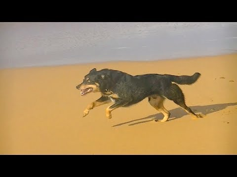 Dog Running In Epic Slow Motion 2 [HD]