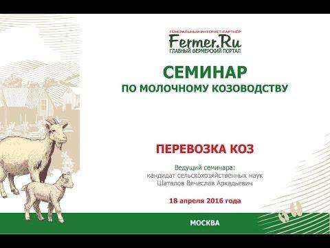 Перевозка коз. Семинар по молочному козоводству.