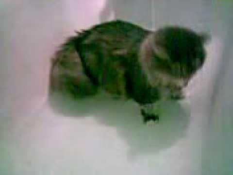 Wet cat want smth.
