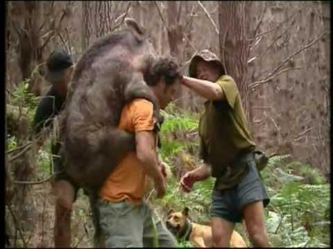 Mark Ellis Goes Pig Hunting...