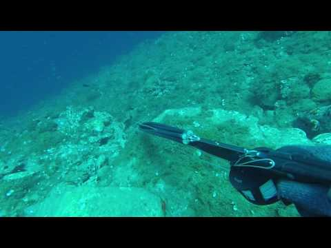 Samos Spearfishing-Dusky Grouper plays Ostrich