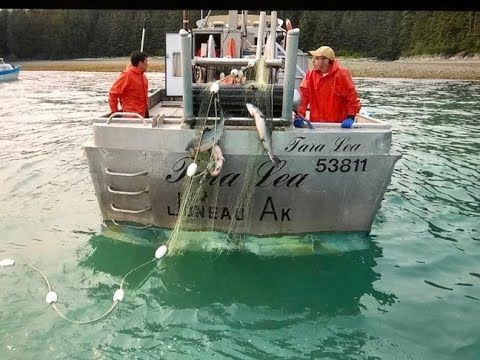 Southeast Alaska Commercial Salmon Fishing (deckhand Edit)