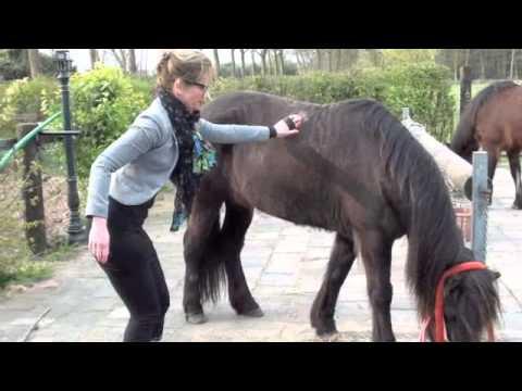 egotrip paarden borstelen