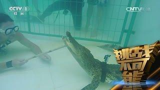 [挑战不可能(第一季)] 鳄鱼救助者杰伊·杨挑战徒手捕捉1.7米长的鳄鱼 thumbnail