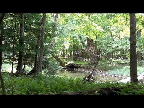 Relaxing forest sounds - One hour nature video of Pennsylvania Appalachia