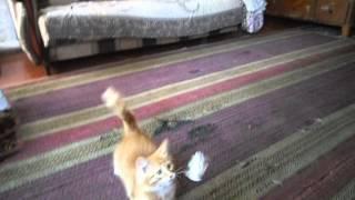ИГРУШКА для котёнка.Нитка и бумажка