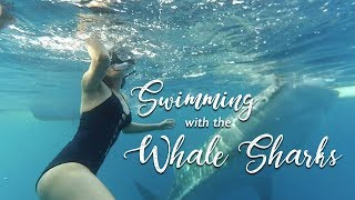 Whale Shark Encounter + Sumilon Island! | Cebu, Philippines