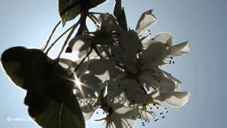 Фотосинтез(, 2014-04-20T10:26:54.000Z)